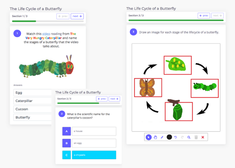 Questions about the life cycle of a butterfly